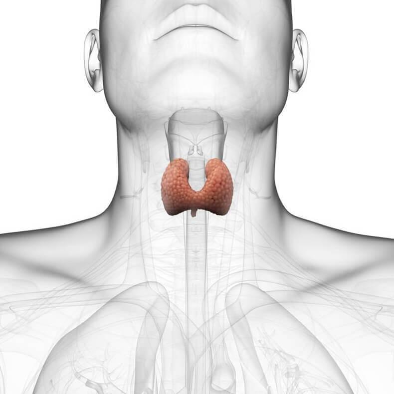 Масло при лечении щитовидной железы thumbnail