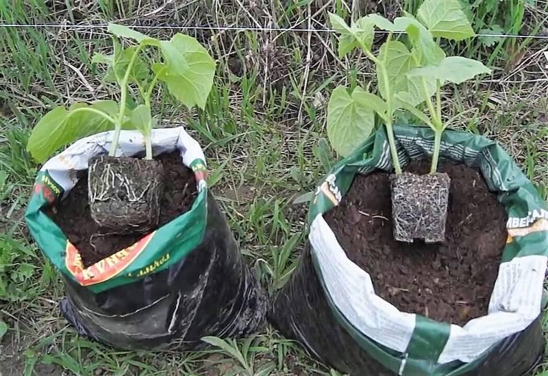 подборка выращивание огурцов в мешках фото провел
