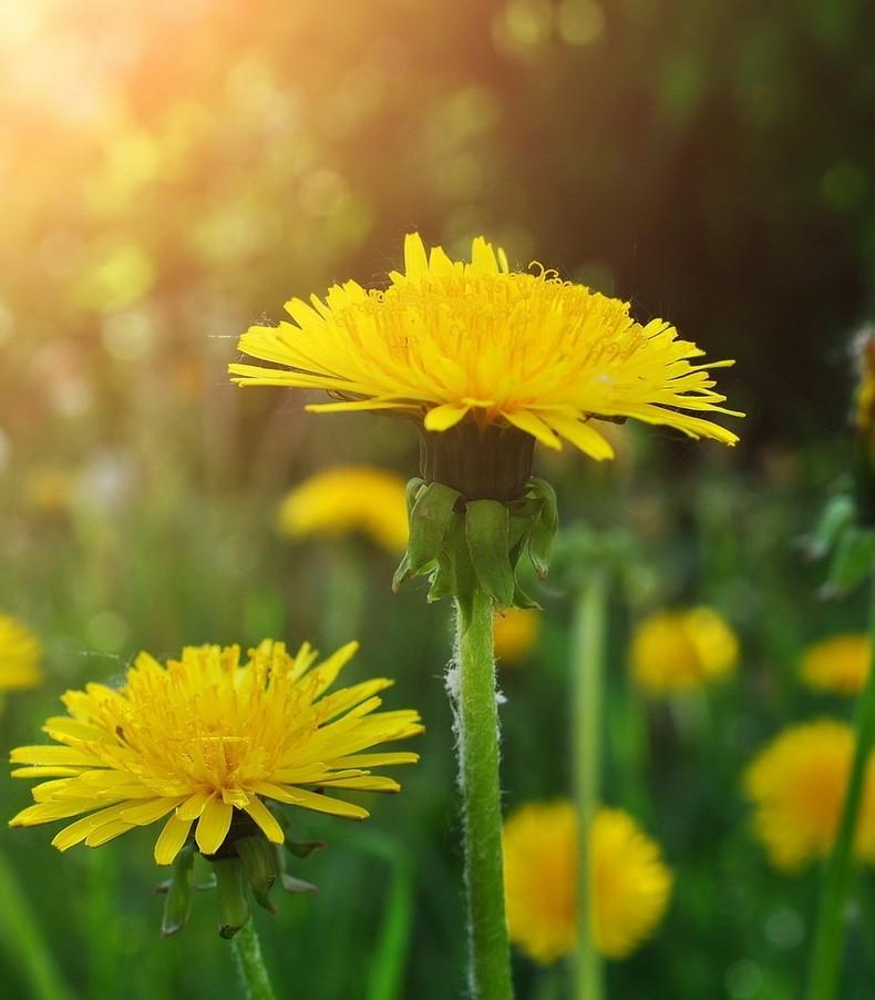 9 лучших растений, для нормализации пищеварения