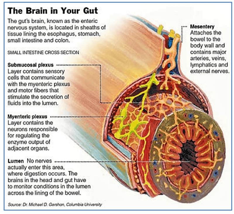 Второй мозг: СЕКРЕТЫ пищевых инстинктов