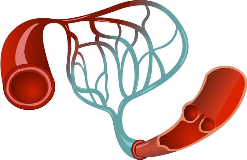 Капилляротерапия: Как улучшить кровообращение