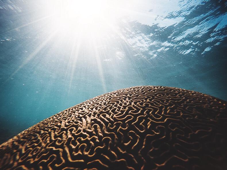 7 законов работы «бессознательного» мозга