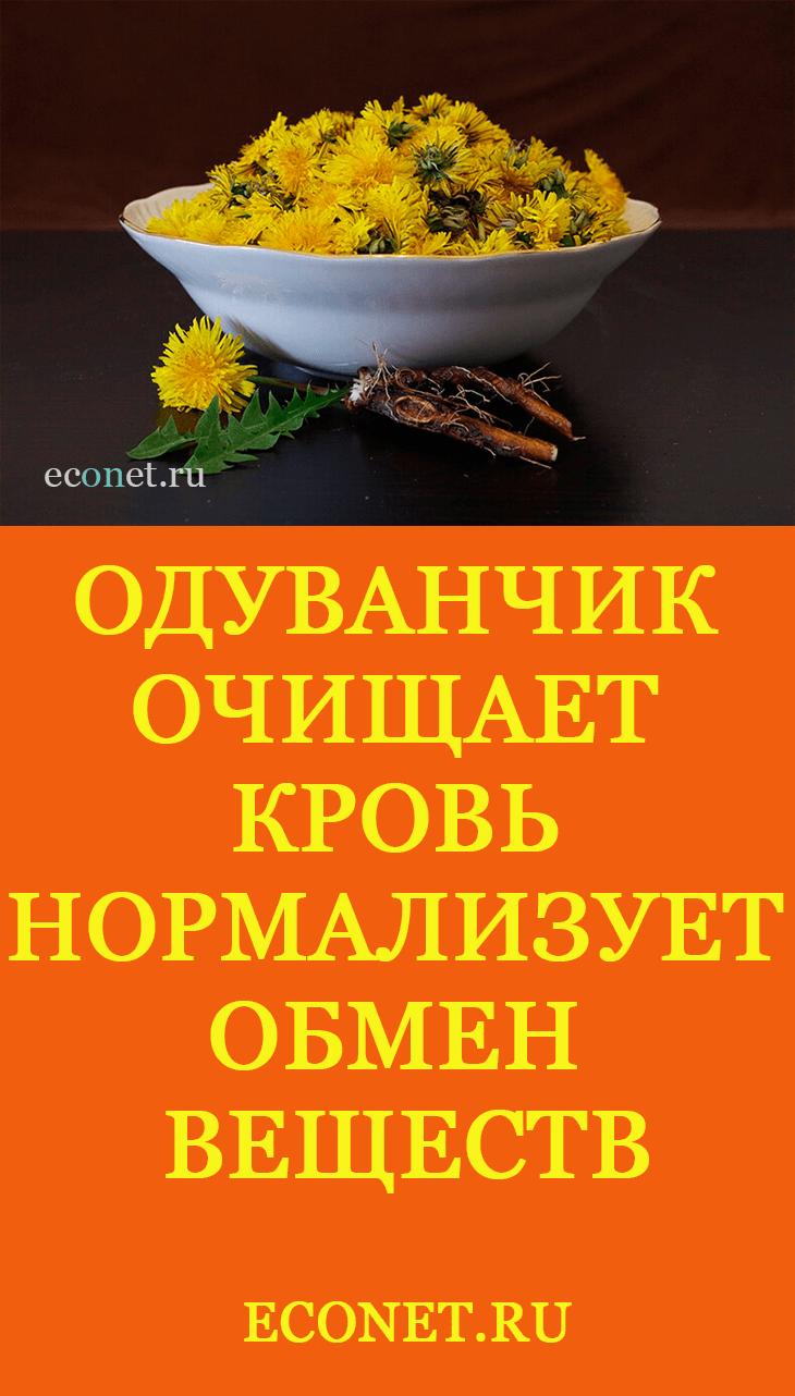 Корень одуванчика при анемии thumbnail