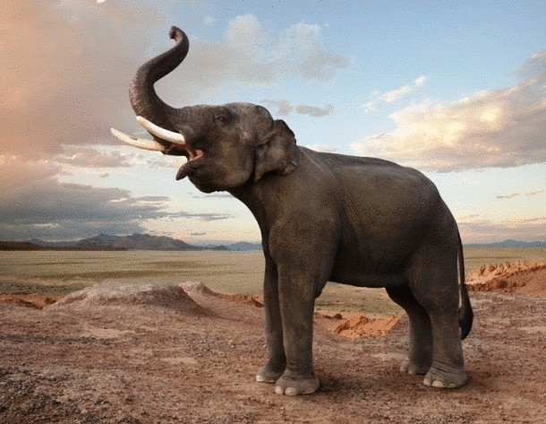 www.johnlund.com-Elephant-Trumpeting