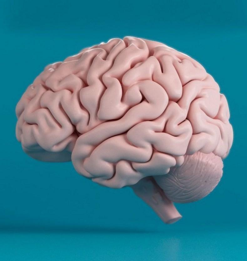 Головной мозг картинки для детей