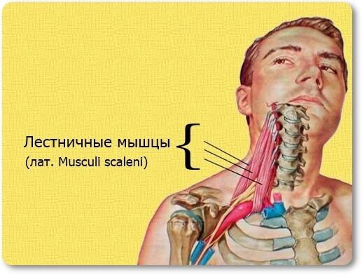 Как навсегда забыть о гипертонии: упражнения доктора Шишонина