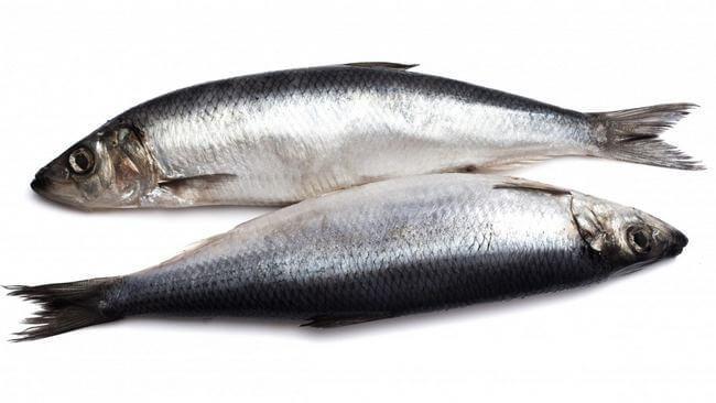 Самые полезные сорта рыб для здоровья: Топ-9