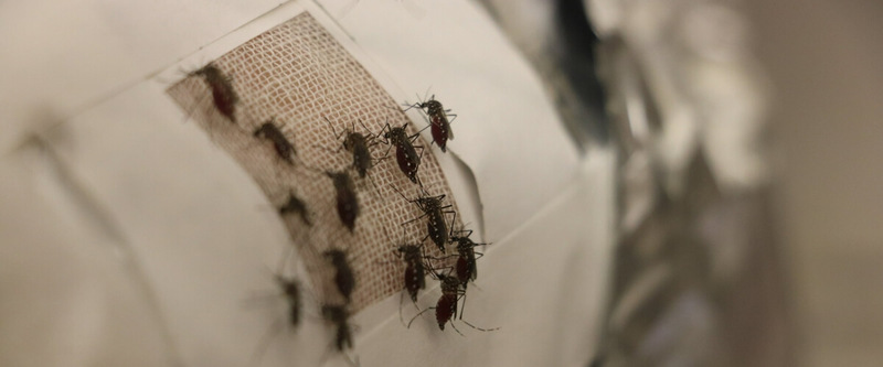 Графен защитит от комариных укусов