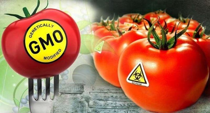 Бактерии и вещества в продуктах питания: Полезные и не очень