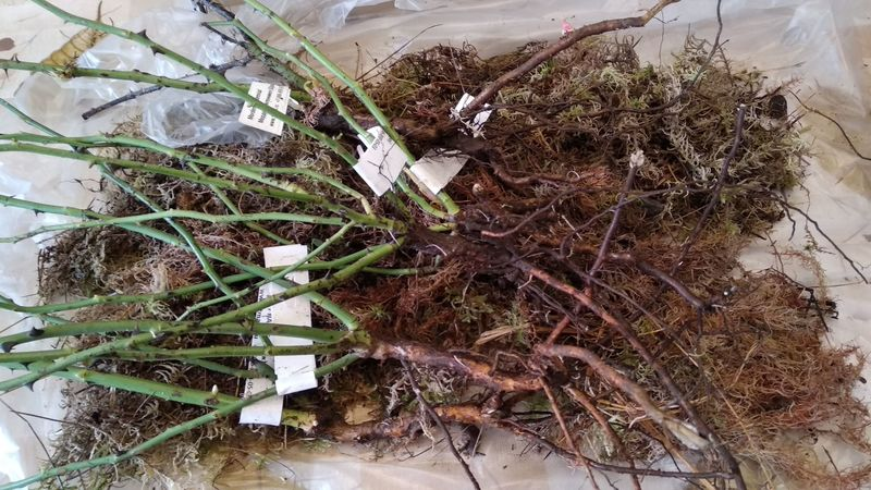 Мох сфагнум для дачника: способы применения в саду и огороде