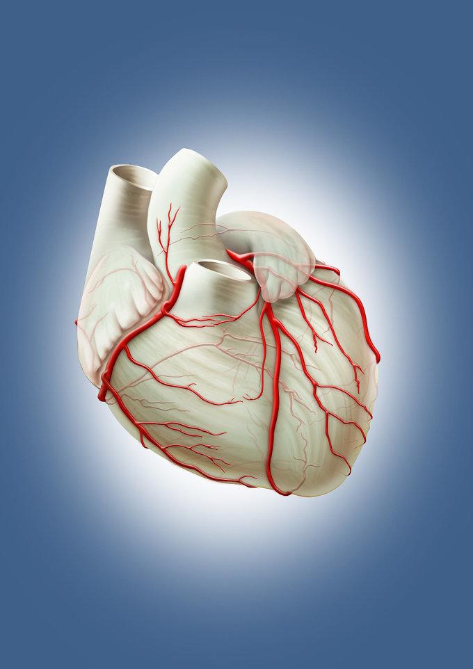 Какие витамины полезны для сердца и сосудов