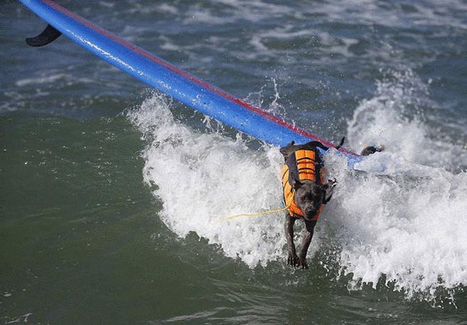 Как прошел самый необычный конкурс сёрфинга в Калифорнии