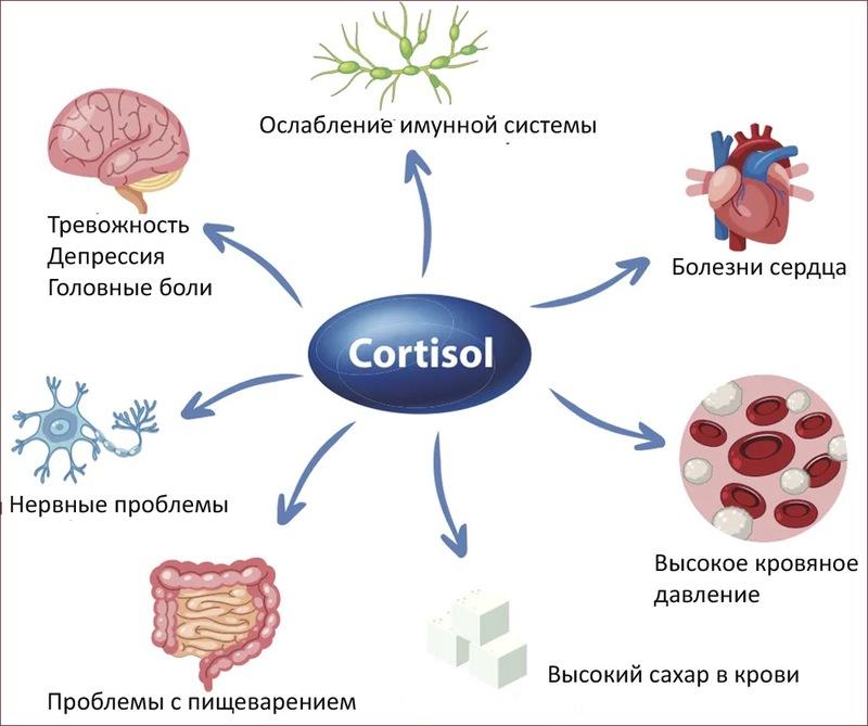 Хронический стресс и кортизол: почему вы плохо спите и не худеете