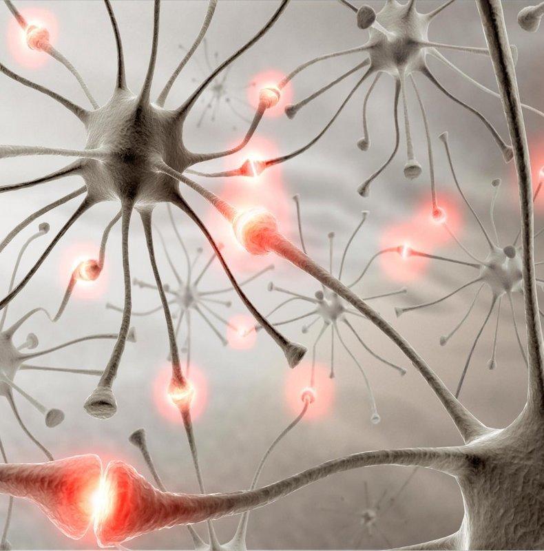 Научные способы остановить старение мозга
