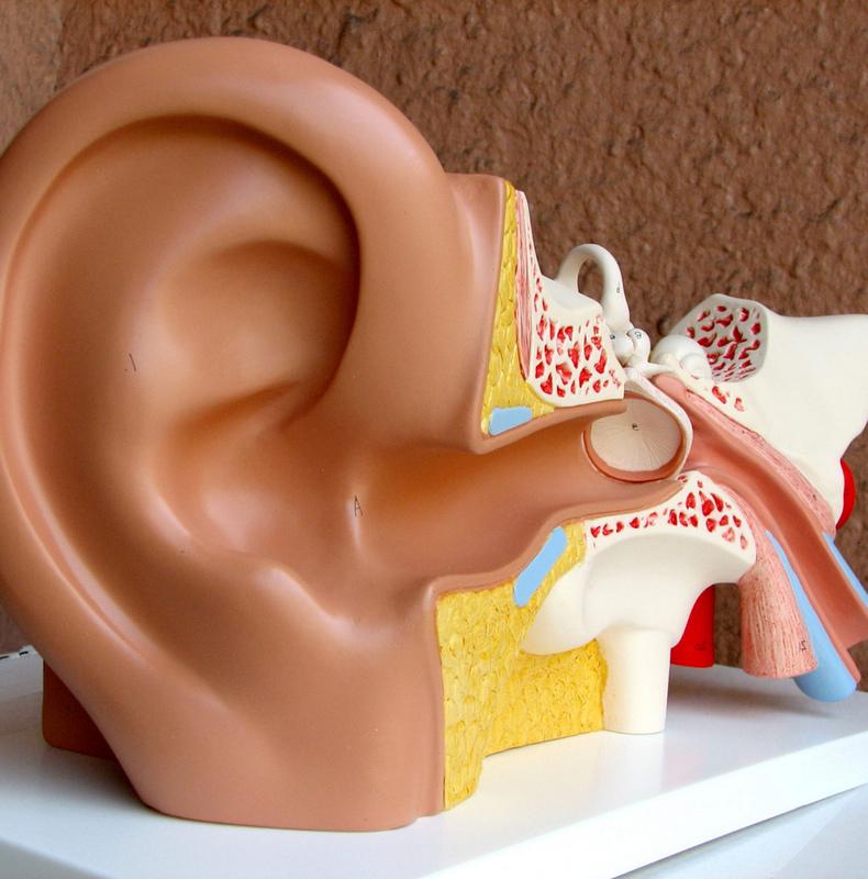 Маневр Эпли: если кружится голова, проверьте уши!