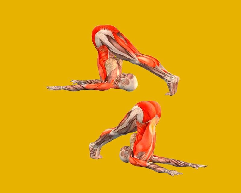 Как выровнять асимметрию тела: эффективная растяжка