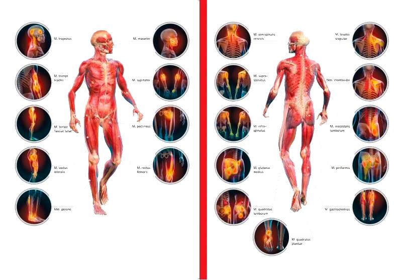 Триггерные точки на вашем теле запускают боль и патологии