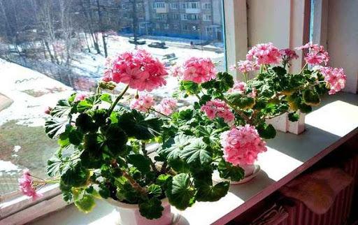 Какие растения опасны для здоровья и энергетики дома