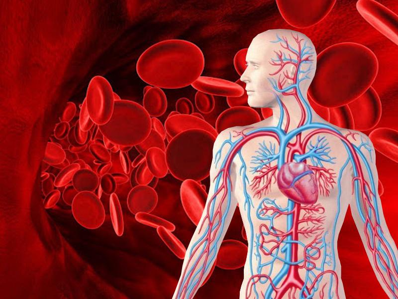 Низкий гемоглобин: симптомы и неочевидные нюансы питания