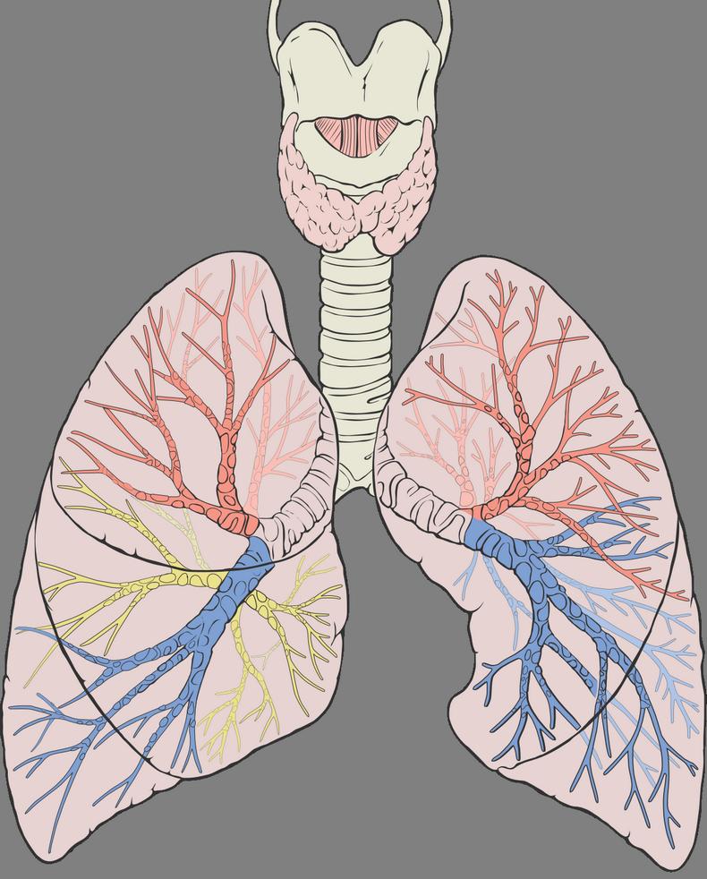 Дыхательные практики на все случаи жизни