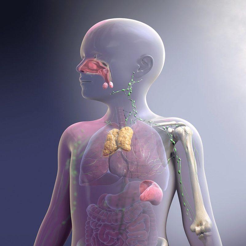 7 малоизвестных факторов, которые снижают иммунитет