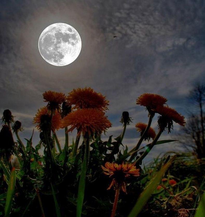 СУПЕРЛУНИЕ 8 апреля 2020: что ждать от огромной луны?