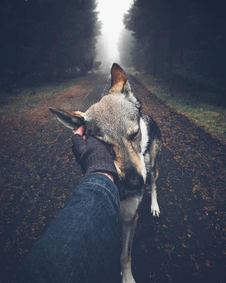 Индейское поверье: Почему нельзя обижать зверей?