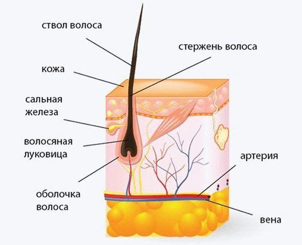 Никотиновая кислота: бешеный рост волос за копейки!