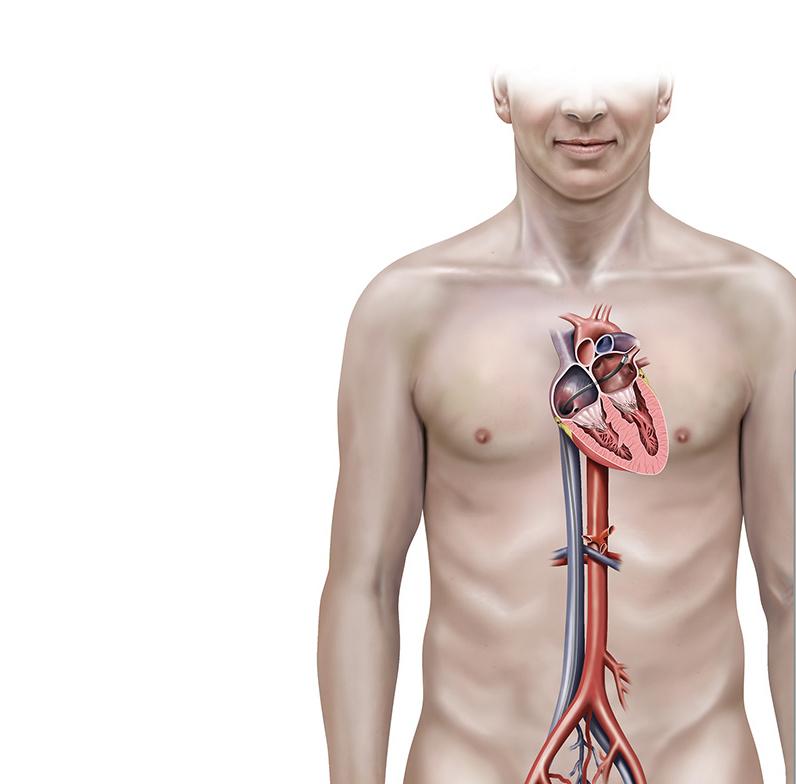 Профессор Огулов: Почему возникаютинсульт, инфаркт, варикоз, гипертония и гипотония