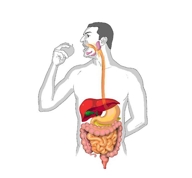 Проблемное пищеварение: источник уныния и плохого здоровья