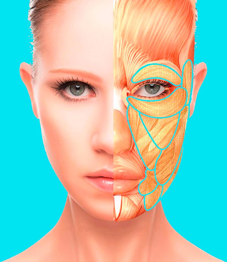 Вместо дорогих салонных процедур: Омолаживающая техника для лица и шеи