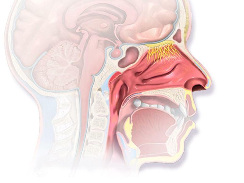 Восточная методика нормализации артериального давления