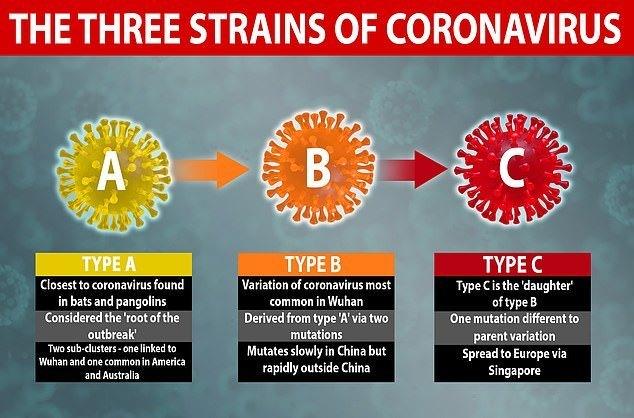 3 типа коронавируса