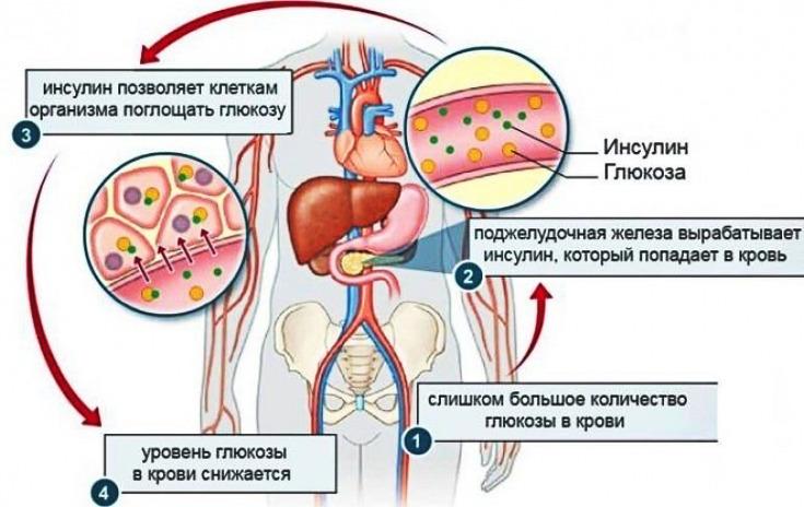 Как взять инсулин под контроль и запустить процесс сжигания жира?