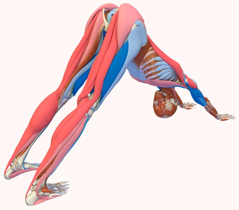 Растяжка: 16 лучших упражнений