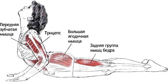 Упражнение для улучшения работы почек и системы пищеварения