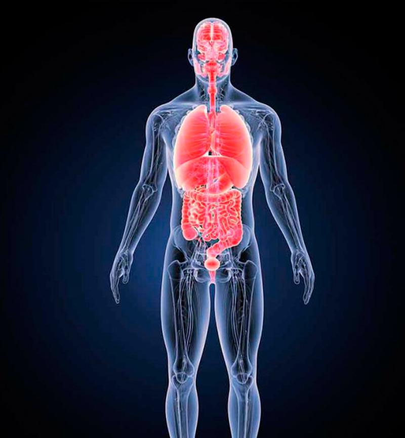 Как наше тело реагирует на периодическое голодание