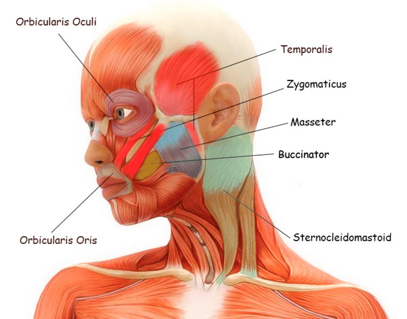 2 упражнения против морщин, обвисших щек и второго подбородка
