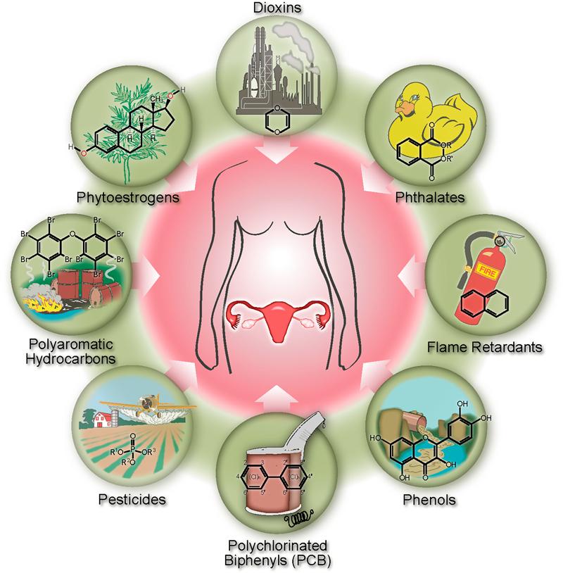 Топ-12 химикатов, разрушающих гормоны