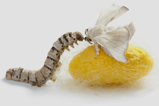 Серрапептаза: фермент для здоровья легких