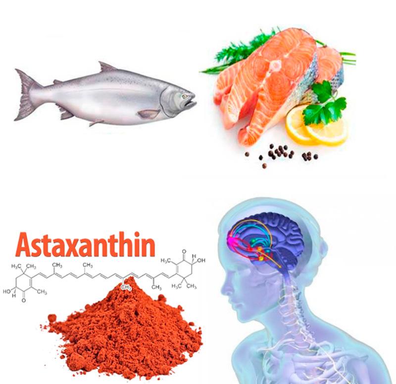 «Король антиоксидантов»: астаксантин  замедляет старение мозга