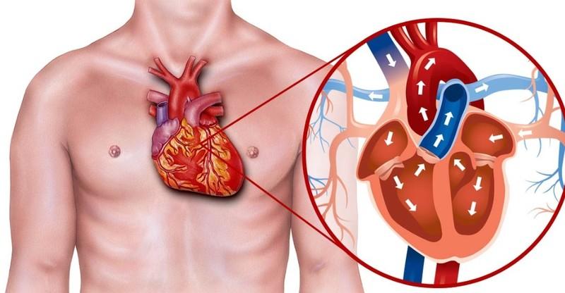 Здоровье сердца: руководство по диете и добавкам