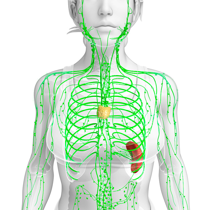 Как очистить организм через лимфатическую систему
