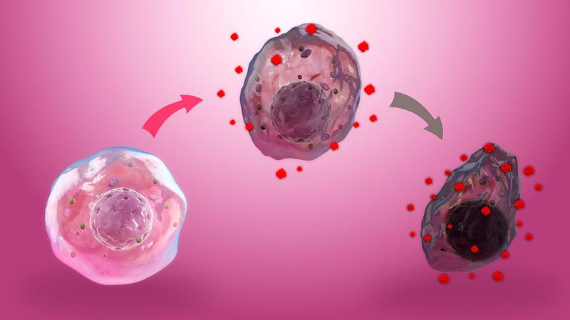Оксидативный стресс: как противостоять клеточному старению?