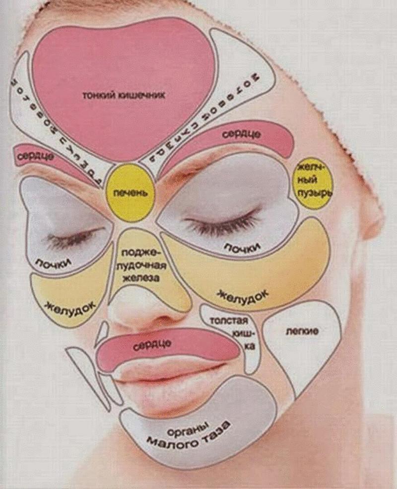 сыпь на лице какие органы