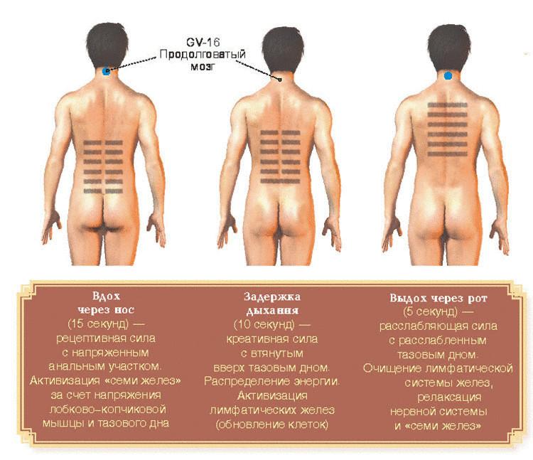 Даосское упражнение для сексуального здоровья и долголетия