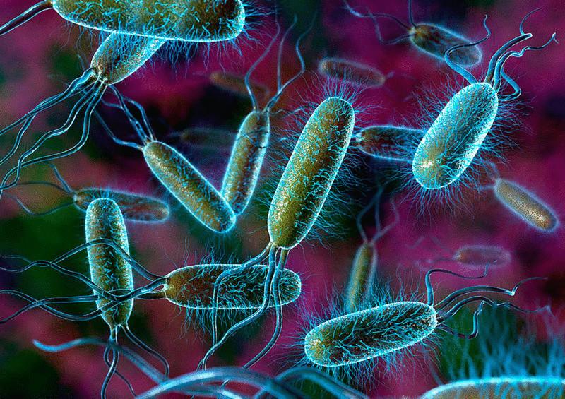 Как микрофлора кишечника управляет поведением человека