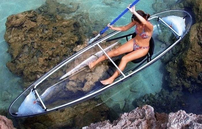 рассчитать дату чем можно отпугнуть акулу от лодки женьшень продукты