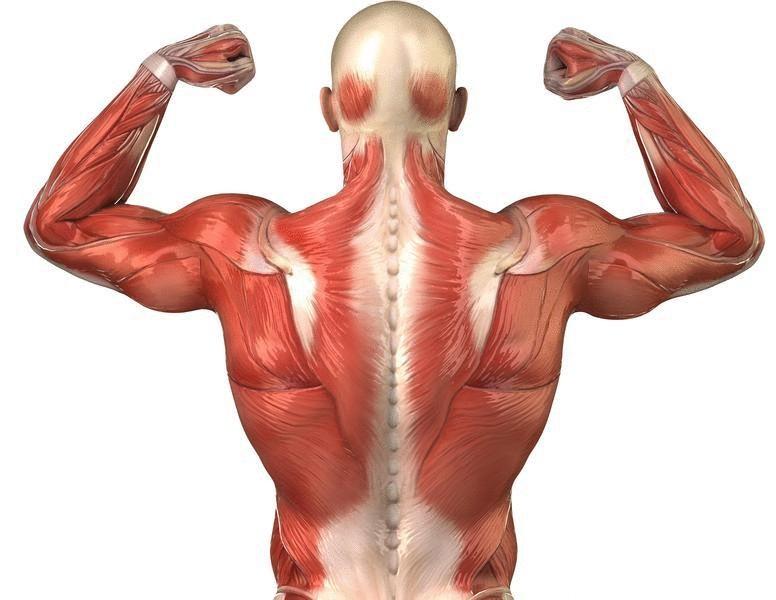 Упражнение цигун и гимнастический комплекс при болях в спине