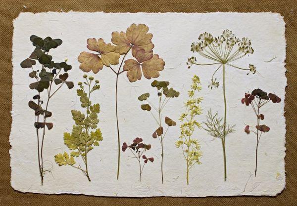 Гербарии цветов листьев